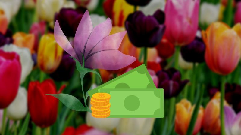 Gracht und Tulpe